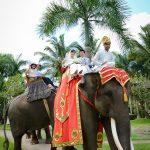 elephantw04