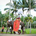 elephantw06