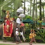elephantwdding05