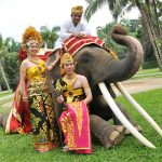 elephantwdding06